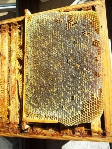 miel bio, miel, miel de montagne, miel des Pyrénées, miel, Paris