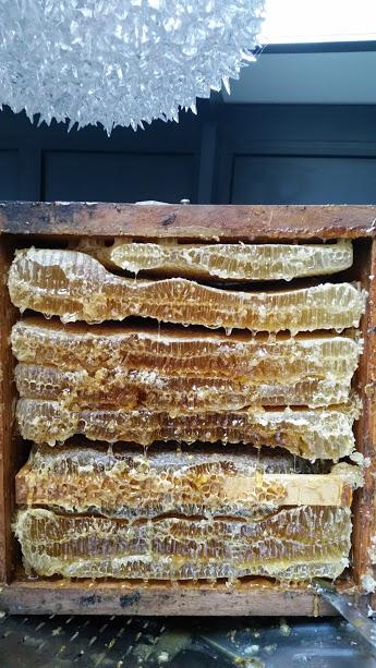 miel,miel de montagne, miel pyrenees