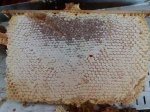 Miel en rayon, rayon de miel, miel en rayon bio, miel rayon, miel avec rayon, rayon miel, miel alvéolé, miel en rayon naturel, rayons de miel