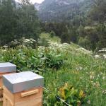 miel d'altitude, miel rare, miel de haute montagne, ruche warré
