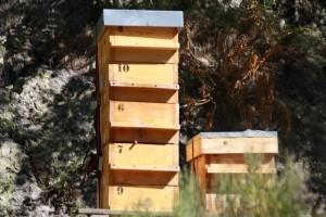 parrainer une ruche, parrainer ruche, parrainer une ruche bio, parrainer ruche bio, parrainer une ruche prix, parrainer une ruche pour sauver les abeilles, comment parrainer une ruche