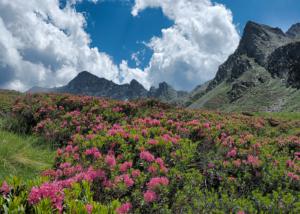 Miel de rhododendron bienfait